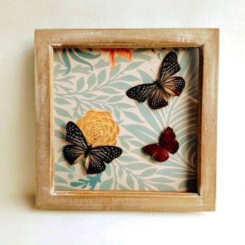 Butterflies displayed in a box frame